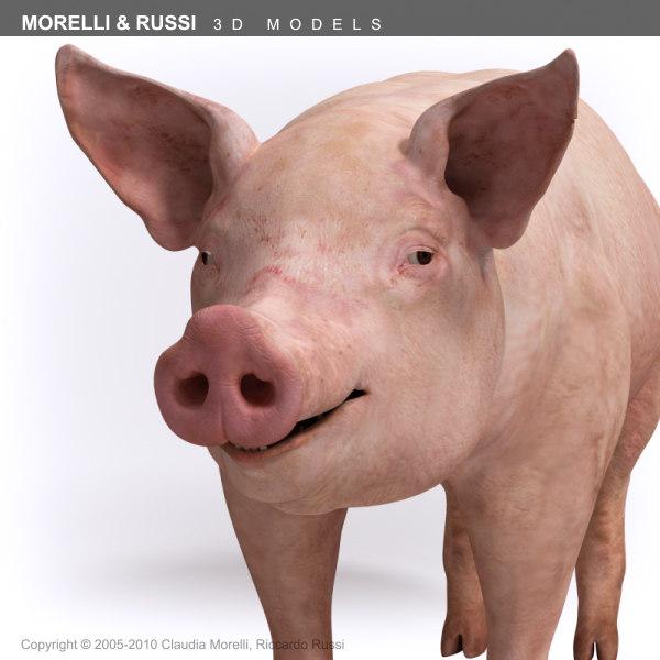 Pig_HQ_TS_06.jpg