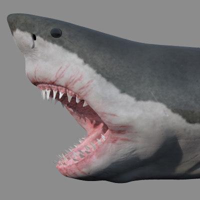 Sharkpreview1b.jpg