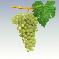 green grapes 3d model
