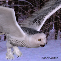 3d model owl snowy