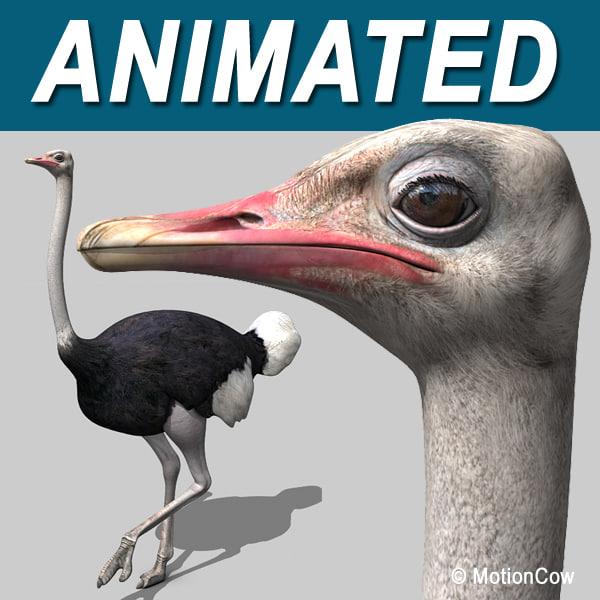 Ostrich_A.jpg