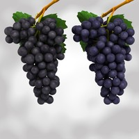 3d model black blue grapes