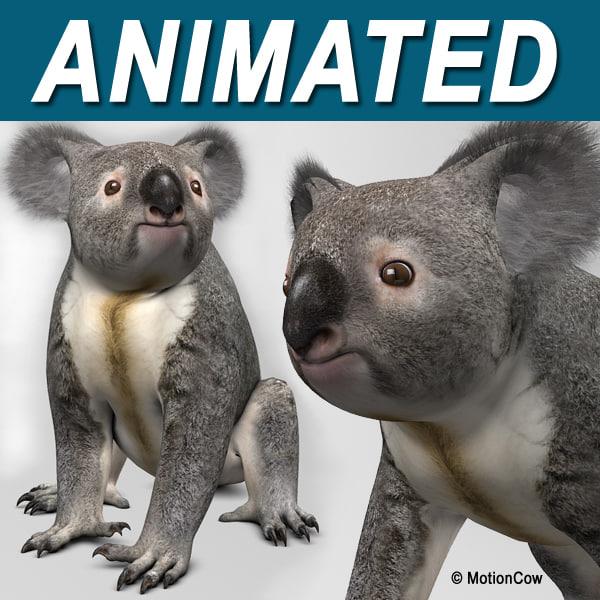 Koala_A.jpg