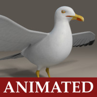 seagull rigged 3d max