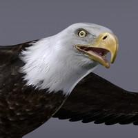 3d bald eagle