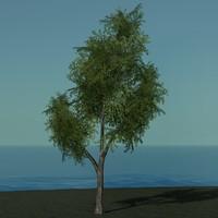 trees c4d