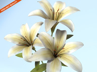 3d tiger lily