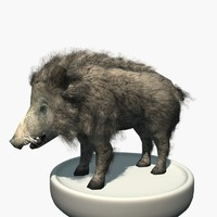 Wild Boar - Low Poly