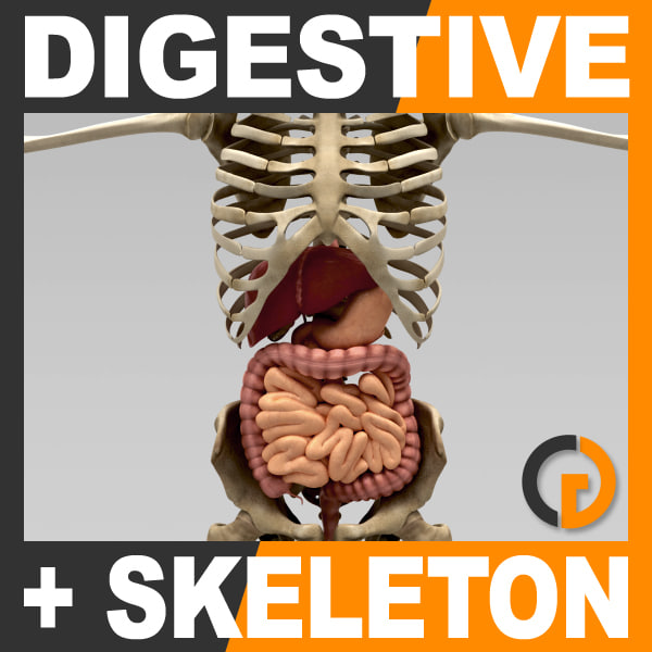 DigestiveSkeleton_th001.jpg