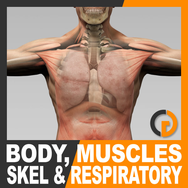 BodyMuscSkelRespir_th001.jpg
