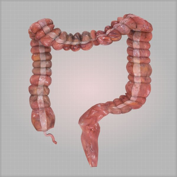 colon large intestine 3d max - Highly Detailed Colon... by t002