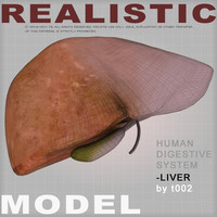 3d model liver medical digestive