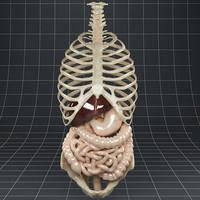 maya esophagus liver gallbladder