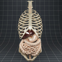 Anatomy_Digestive System