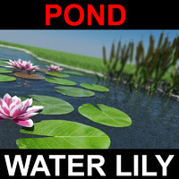pond with water lily