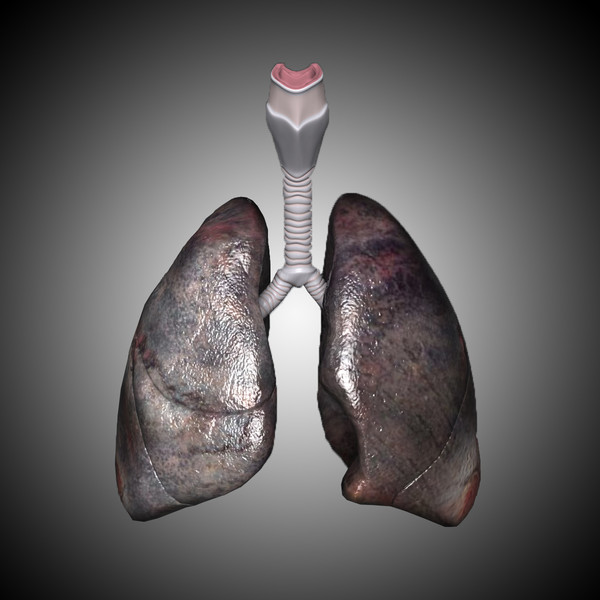 3ds max lungs abused realistic - Abused Lungs - Realistic... by hybridVFXinc