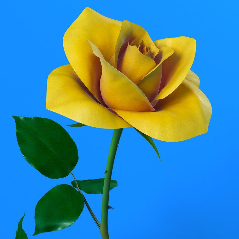 yellow_rose_00.jpg