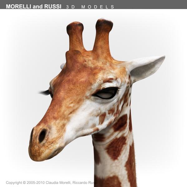 Giraffe_HQ_Texture_TS600-07.png