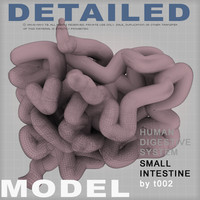 small intestine digestive 3d model