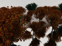 (20) D2.C1.32 Maple Trees-Arboles de Maple