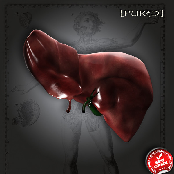 3dsmax human liver gall bladder - Liver with Gall Bladder - Realistic... by hybridVFXinc