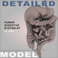 max human digestive colon