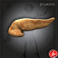 3d pancreas realistic model