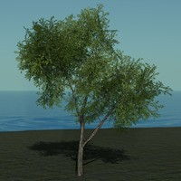 3ds max trees