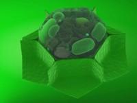 3d model cell