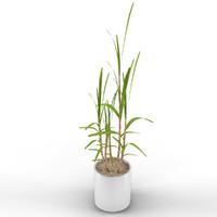 max small plant