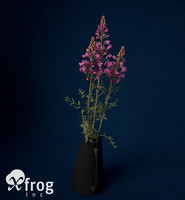 XfrogPlants Snapdragon