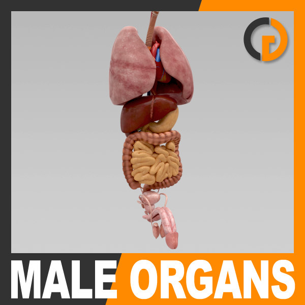 InternalOrgans_th001.jpg