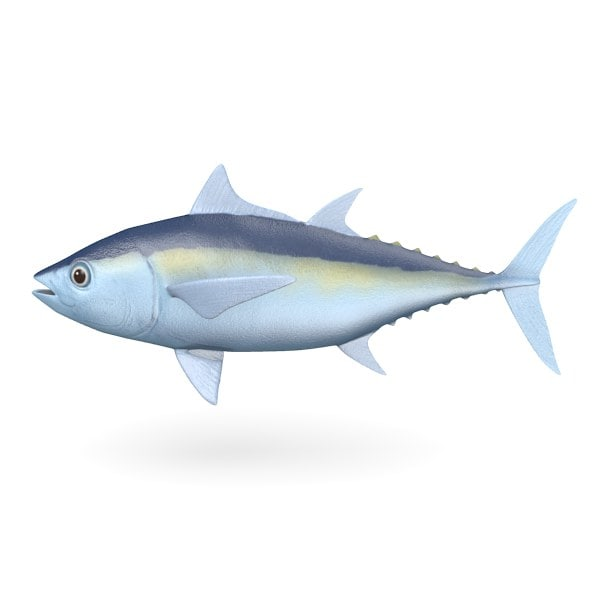 blackfish tuna.jpg