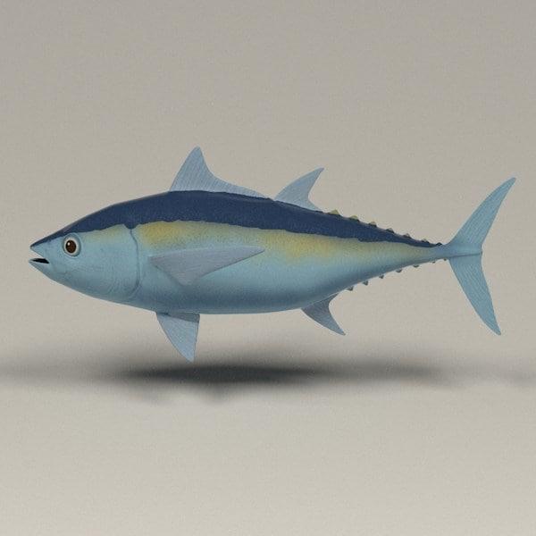 3d Tuna Fish: 3d Thunnus Blackfin Tuna Model