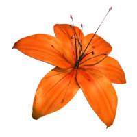 flower 3d 3ds