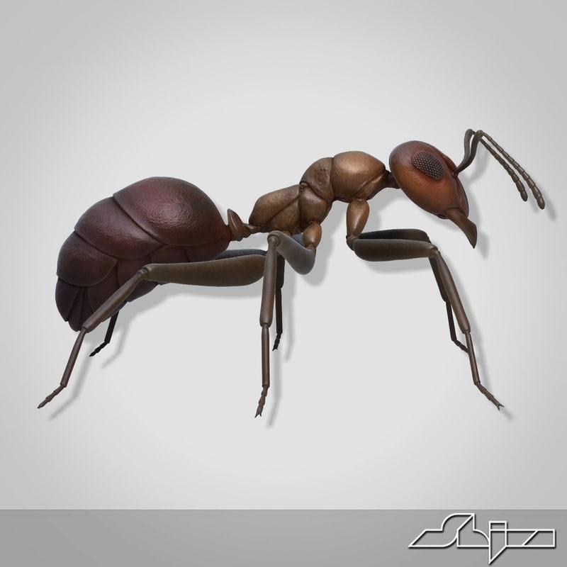 Ant_render-7.jpg