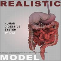 human digestive 3d max