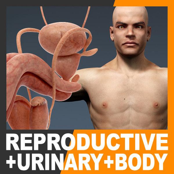 UrinReprodBodyTex_th00.jpg