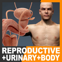 maya human male body urinary