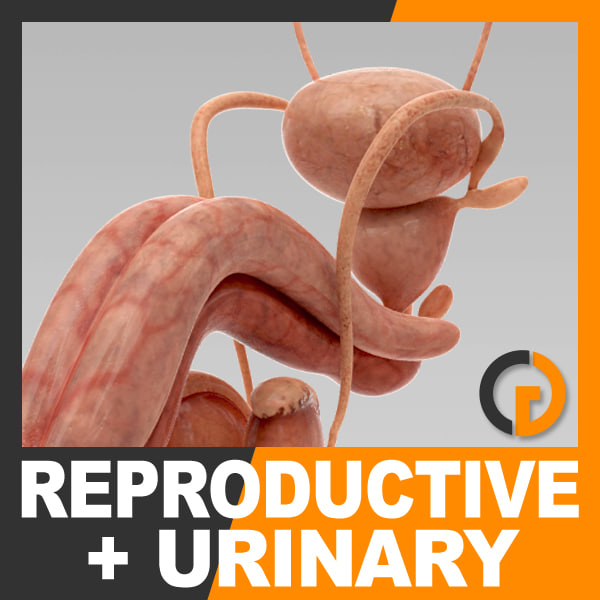 UrinaryReproductive_th00.jpg