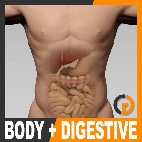BodyDige_th01.jpg