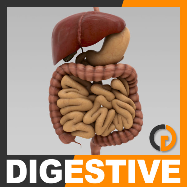 Digestive_th001.jpg