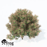 3ds max european smoketree europe