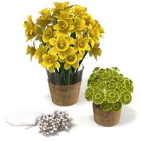 narcissus flower bouquet set home decor accessory accent seashell coral plant