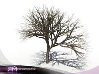 D2.C1.05 Dead tree, Arbol Seco