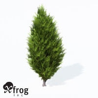 3d model savin juniper planted