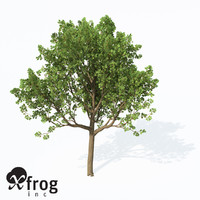 3d downy oak trees