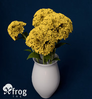 3d coxcomb plants flowers