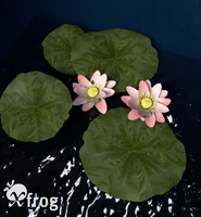 3d model of nelumbo plants flower