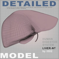 Highly Detailed Liver-NT(1)
